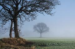 The Ghost Tree (A.Leighton Photography) Tags: yorkshire landscape england uk tree field farmland mist fog winter nikon d5100