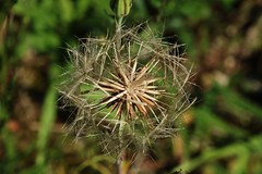 Samen -Seeds