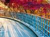 Fall View-Bomunsan-Daejeon-South Korea (mikemellinger) Tags: daejeon southkorea korea republicofkorea asia northeastasia beauty nature scenery landscape view viewpoint 대전 대한민국 fall falltime autumn season fallcolors trees colorful autumncolors 단풍 가울 bomunsan bomunmountain mountain hill 보문산 전망대 sun
