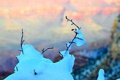 Grand Canyon 56 (Krasivaya Liza) Tags: grandcanyon grand canyon national park canyons nature natural wonder az arizona holiday christmas 2016 snowy winter cliffs cliffside edgeofcliff