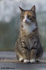 Katze 01 (Fooß) Tags: