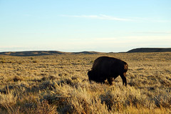 American Prairie Reserve 7