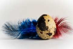 Learning To Fly (PhilR1000) Tags: macro egg quail feather macromondays red blue explored