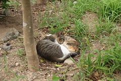 足摺岬の毛玉×2