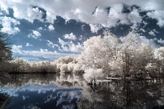 Finis (Thomas James Caldwell) Tags: blue trees sky usa cloud white abstract reflection nature water pool de ir outdoor wildlife national bombay infrared delaware refuge finis