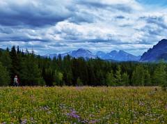 7-105 (Gnarlene) Tags: hiking banff healypass monarchramparts