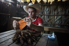 Hand rolling (Lil [Kristen Elsby]) Tags: travel topv1111 cuba editorial farmer dailylife cuban vinales tobacco travelphotography cigarrolling documentaryphotography cubancigar tobaccofarming vinalesvalley tobaccofarmer westerncuba valledevinales canon5dmarkii