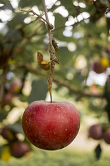 apple (xubean) Tags: atlanta canon photography nepali nepaliphotographer