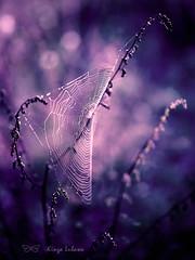 spider's web (kinga.lubawa) Tags: autumn colors canon tamron kolory kolorowe canon6d