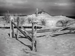 (mahler9) Tags: parabolicdunes blackandwhite fence wooden beach dunes sand coast capecod bnw