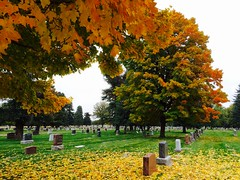 302/365/4 (f l a m i n g o) Tags: tree fall cemetery leaves wednesday october colorado 21st iphone 2015 project365 365days