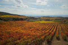 Viñas en Otoño 9 (Garimba Rekords) Tags: santa de la san piscina colores cambio otoño vicente rioja maría panorámica amarillos viñas rojos marrones sonsierra podadas peciña