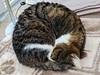 IMG_20150516_073836 (d_fust) Tags: cat kitten gato katze 猫 macska gatto fust kedi 貓 anak katt gatito kissa kätzchen gattino kucing 小貓 고양이 katje кот γάτα γατάκι แมว yavrusu 仔猫 का बिल्ली बच्चा