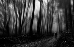 Solitude (Natalini Cristian) Tags: bw foglie alberi canon persona monocromo strada streetphotography via solo e nebbia sentiero inverno autunno bianco atmosfera nero cristian buio bosco tristezza prospettiva mosso emozioni 24105 sfocato contrasto creativo sagoma natalini solitidine