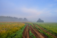 The misty sunrise at a meadow in Central Russia (YuTrof) Tags: russia air blue clear clouds country countryside dawn dirt earth fog grass grassland greenland herb meadow mist misty morning nature outdoor plain road rural sky soil summer sunrise