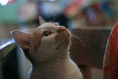 Where's my food? (katjacarmel) Tags: cat animal pet kat gato animals cats colors cute portrait closeup