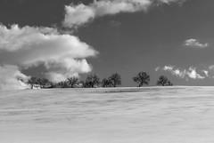 White and Black: trees to the sky (simone_aramini) Tags: monocrome blackandwhite nikond200 naturallight nikon nationalgeografic ngc nature lavalnerina landscape lucinaturali landscapes umbria umbrialandscapes paesaggi paesaggio