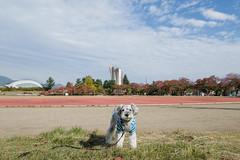 マイトラック (photojiro) Tags: 10月 fujifilmxpro2 fujifilm fujinon xf1024mmf4rois テオ 撮って出し 晴れ 秋 長野運動公園 サブトラック 紅葉