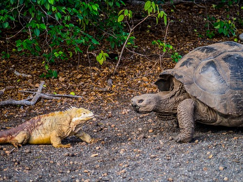 """Galapagos-65.jpg • <a style=""""font-size:0.8em;"""" href=""""http://www.flickr.com/photos/91306238@N04/31661578633/"""" target=""""_blank"""">View on Flickr</a>"""
