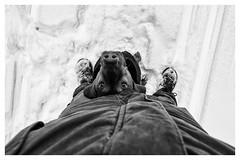 Way Down We Go (lichtbildung - sapere_aude) Tags: hund dog magyarvizsla mann man schutz protection schuhe shoes meindl winter schnee snow trier pentaxk3 15mm