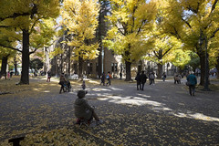 Tokyo.文京区本郷 安田講堂前の銀杏並木 (iwagami.t) Tags: 201611 fujifilm fuji xt1 xf14mm japan tokyo city town university people