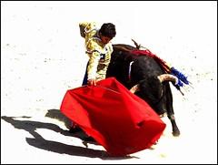 derechazo (aficion2012) Tags: arles france francia novillada feria riz septembre 2016 corrida toros toreaux bull bullfight flight leo valadez blohorn jalabert novillo novillos