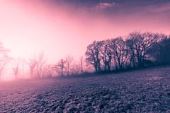 The Apocalyptic Blast (Maximecreative) Tags: select mist fog foggy trees nature silhouette split toning landscape cold visibility apocalypse blast brouillard brume brumeux creative 14mm samyang wide switzerland digital blue purple art light winter hiver