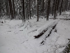 White blanket (mag3737) Tags: snow woods forest fromme mtfromme