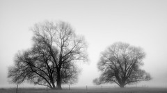 Foggy Morning (Michael A64) Tags: nebel fog foggy morning morgen morgens tree trees baum bäume