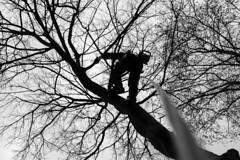 Climber (Marit Derks) Tags: climber climbing treeclimbing chainsaw