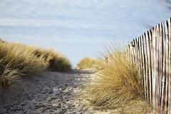 Direction la plage (Guillaume7762) Tags: chemin plage sable oyat