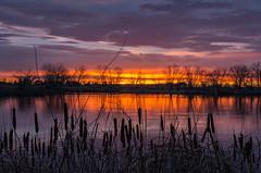 A Quick Sunrise (Nancy King Photography) Tags: arapahobendnaturalarea catails clouds colorado fortcollins lake landscape reflection silhouette sunrise