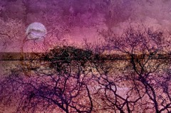 Silhouettes With Painted Moon (SolanoSnapper) Tags: perfectlypainterly theawardtree silhouetteswithpaintedmoon tmi treesandplantssilhouettes