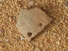 Chad Tibesti NE (ursulazrich) Tags: tschad chad tchad ciad sahara tibesti desert pottery keramik scherben sherds shards