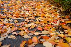 Leaf (Minh-Hoàng) Tags: blätter la autumn oktober fuji xphotographers