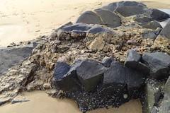 117. Rocks on the beach (GraynKirst) Tags: summer beach rock stone scotland seaside sand rocks aberdeenshire sandy shell barnacles limpet barnacle stcombs kirstyjarman