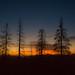 Burned trees of Yosemite