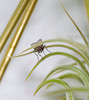 This fly sure got an eye full in the bathroom (SSelJEFE) Tags: hairy canon bug insect bathroom photography fly wings eyes legs flash airplant brass bulging 6d ef100mm