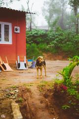 IMG_6222 (athingcalledlife) Tags: blackandwhite india green art nature rain photography colours lush coorg virajpet vsco