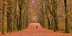 Enjoy ...! (Alex Verweij) Tags: autumn trees walking bomen doorn kaapsebossen wandelen herfst sfeer