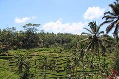 Bali rice terraces (KENO Photography) Tags: travel bali green tourism field rural indonesia landscape asian outside outdoors landscapes countryside asia rice terrace outdoor farm country hill farming terraces harvest grow farmland hills growth pasture crop fields destination farms crops pastures growing agriculture pastoral ricefield ricefields indonesian slope touristattraction cultivation attraction agricultural attractions touristattractions riceterraces slopes riceterrace balinese highangle terraced destinations farmstead cultivate sloped traveldestinations farmscene farmscape levit traveldestination agriculturalindustry highangles agricultureindustry