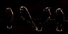 LUMIX DMC-FZ300 - Bence Máté- Afrika (LUMIX Deutschland) Tags: africa leica travel bird animal lumix tiere wildlife panasonic afrika mate makro vogel reise bence reisefotografie tierwelt makrofotografie bencemáté fz300