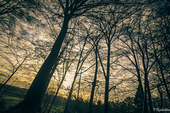Tree view, (Tristan Roebersen) Tags: old panorama cloud sun mountain plant mountains flower tree stone tristan clouds canon walking outside eos cool shoes view vet walk treetops chilling age epic shining tops chill 1200d roebersen