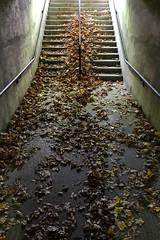 Urban Fall (Evan MacPhail Photography) Tags: evan urban canada fall nova concrete photography navy stairway scotia halifax leading dockyard macphail a