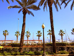 Palm trees (Susannaphotographer) Tags: travel trees summer vacation holiday nature alberi landscape spain europa europe view palm espana alicante viaggi palme viaggio vacanza spagna traveler viaggiatore palmut