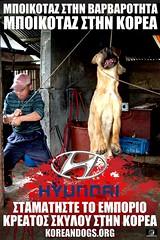 ΜΠΟΙΚΟΤΑΖ ΣΤΗΝ ΒΑΡΒΑΡΟΤΗΤΑ, ΜΠΟΙΚΟΤΑΖ ΣΤΗΝ ΚΟΡΕΑ!(Greek) (Koreandogs) Tags: samsung lg daewoo sk kia dogmeat southkorea hyundai fila boshintang 한국 animalcruelty 대한민국 animalabuse koreanairline 보신탕 asianaairline gaegogi 개고기 영양탕 사철탕 누렁이 dogsoju dogelixir 개식용 도살 개소주 보신문화 식용견 개농장