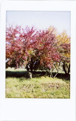 Boschi di Carrega (QueenSunshine III) Tags: italy analog landscape polaroid italia fuji places mini fujifilm bosco instax fujicolor analogico boschidicarrega fujifilminstaxmini90