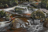 Campsie Glen (3) (Shuggie!!) Tags: campsiefells hdr landscape morninglight moss rocks scotland water zenfolio karl williams karlwilliams
