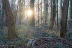 Sunrise (Renate van den Boom) Tags: 12december 2016 boom bos europa gelderland jaar landschap maand natuur nederland oosterhout renatevandenboom seizoenen winter zon zonsopkomst