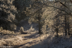 161230_006-146.jpg (Jacky Vastmans) Tags: limburg maasmechelen mechelseheide beriezen bevroren bos cold dennebomen dennen freezing frozen koud landscape landschap panorama pine sneeuw sneeuwlandschap snow snowylandscape sparren stilleven vriezen winter winterlandschap wood